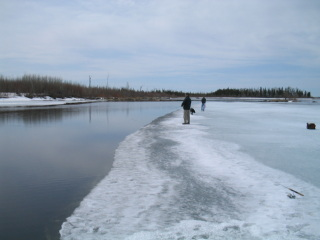icefishnumber1